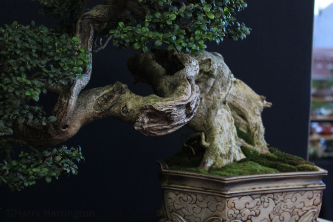 Images from the european bonsai san show saulieu france