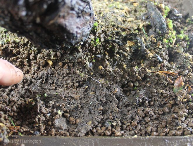 An introduction to bonsai soils for Introduction of soil